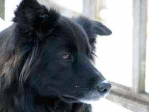 My dog, Jackson